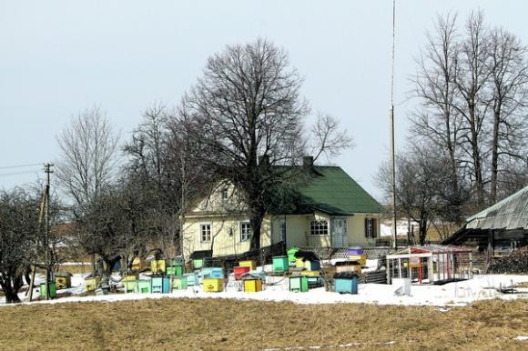 Įvairiaspalviai Lazauskų aviliai šviečia iš tolo. Petro Malūko nuotr.