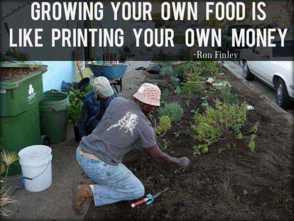 Auginti savo maistą tai lyg spausdinti savo pinigus.