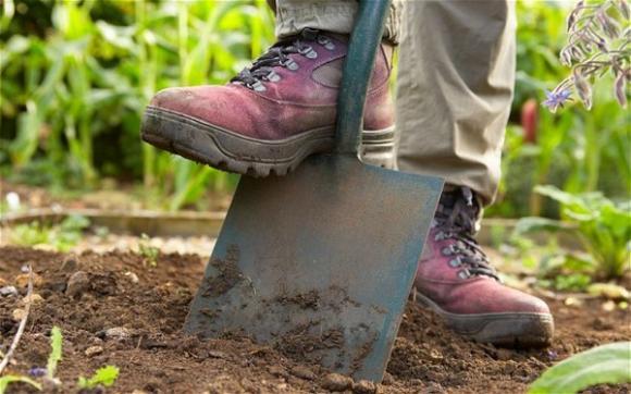 Sodininkystė gali būti puikus stresą mažinantis laisvalaikio pomėgis, jei į darbus sode, darže ar gėlyne bus žiūrima kaip į mėgstamą užsiėmimą, o ne kaip į privalomus, būtinus darbus.