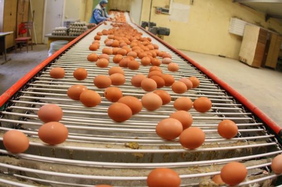 Užterštus kiaušinius nurodyta išimti iš prekybos ir utilizuoti. Petro Malūko nuotr.