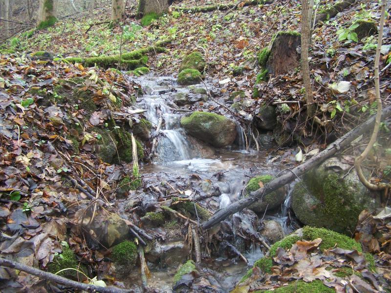 Iš bevardžio šaltinėlio ištekantis upelis.